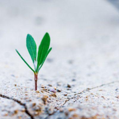 crescita personale e aziendale