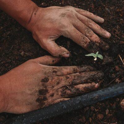 Agricoltura sociale: relazioni per un cibo più sano e sostenibile.